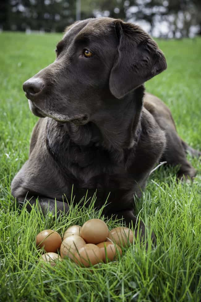 Egg is listed (or ranked) 3 on the list Healthy People Food You Should Actually Be Feeding Your Dog