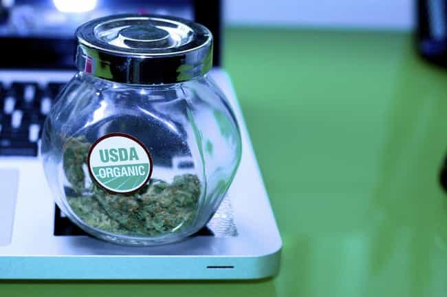 Cannabis is listed (or ranked) 3 on the list 26 Crazy Things You Can Buy on the Dark Web