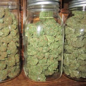 Weed is listed (or ranked) 15 on the list What Is the Best Way to Spend $100?