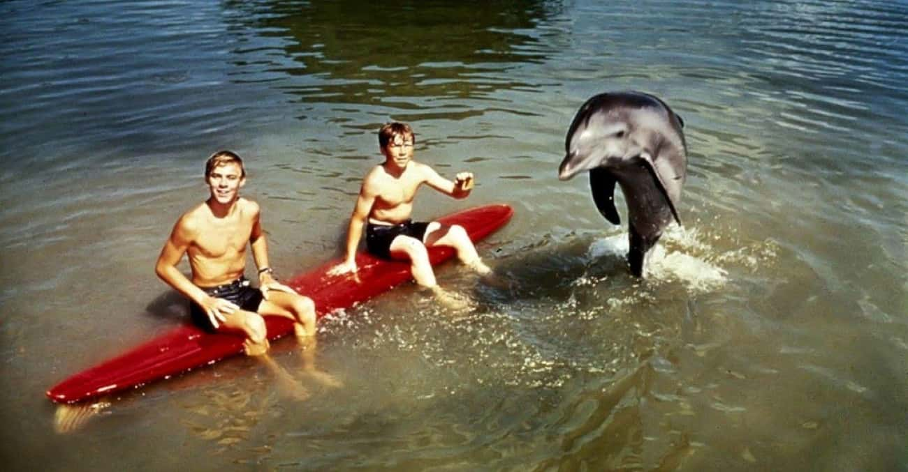 The Dolphin That Played Flippe is listed (or ranked) 3 on the list The Saddest Fates Of Our Favorite Movie And TV Animals