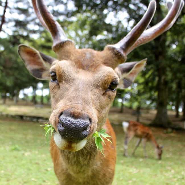 Nara Park is listed (or ranked) 4 on the list The Best Vacation Spots for Animal Lovers
