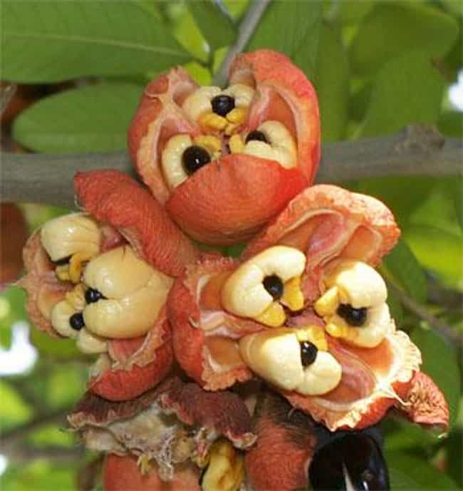 Ackee is listed (or ranked) 2 on the list The Top 10 Most Dangerous Fruits and Vegetables in the World