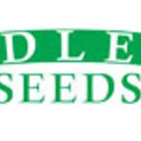 Adler Seeds
