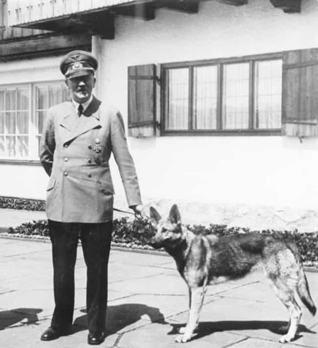 Adolf Hitler is listed (or ranked) 2 on the list Even History's Most Evil Dictators Had Pets
