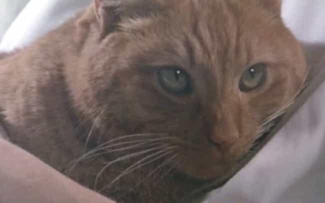 Alien is listed (or ranked) 1 on the list The Best Final Pets That Make It Through Horror Movies