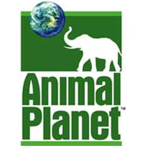 Animal Planet is listed (or ranked) 23 on the list TV Networks with the Best Shows