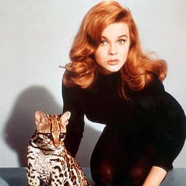 Ann-Margret is listed (or ranked) 1 on the list 34 Celebrities Who Were in Kappa Alpha Theta