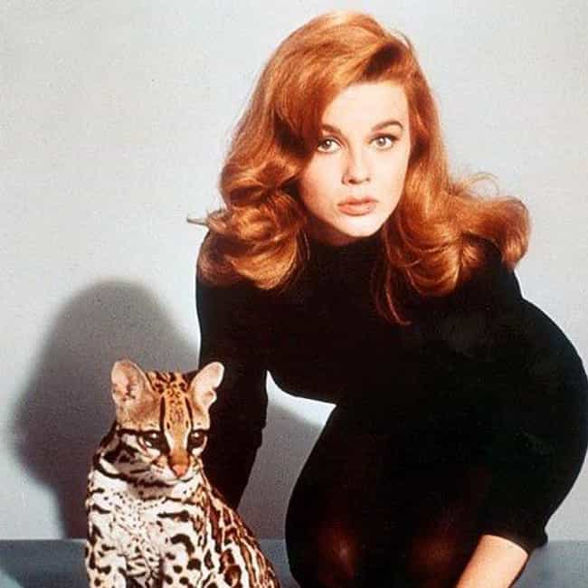 Ann-Margret is listed (or ranked) 4 on the list Famous People You Didn't Know Were Lutheran