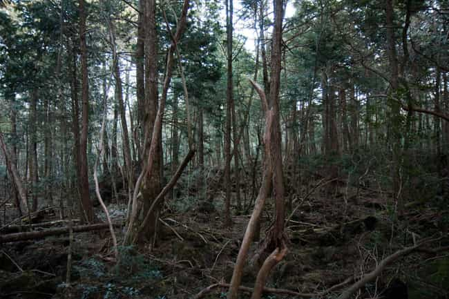 Aokigahara is listed (or ranked) 1 on the list The Scariest Real Places on Planet Earth