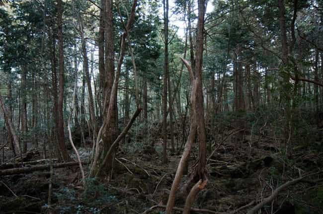 Aokigahara is listed (or ranked) 3 on the list The Scariest Real Places on Planet Earth
