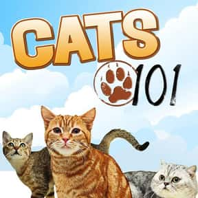 Cats 101 is listed (or ranked) 10 on the list The Greatest TV Shows About Cats
