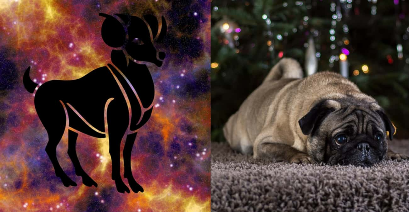 Aries - Dog is listed (or ranked) 1 on the list Your Ideal Pet According To Your Zodiac Sign