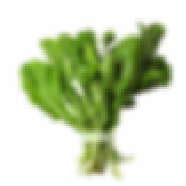 Salad Rocket is listed (or ranked) 4 on the list 21 Types of Lettuce, Ranked Best to Worst