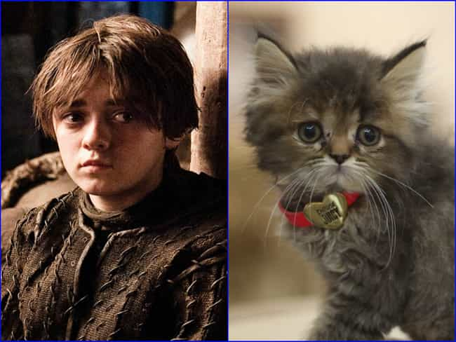 Arya Stark is listed (or ranked) 4 on the list 20 Cats Who Look Like GoT Characters