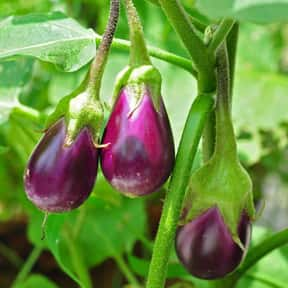 Eggplant is listed (or ranked) 6 on the list Vegetables That Are Technically Fruits