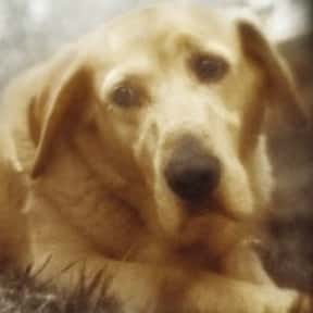 Old Yeller is listed (or ranked) 7 on the list The Saddest Deaths in Kids Movies
