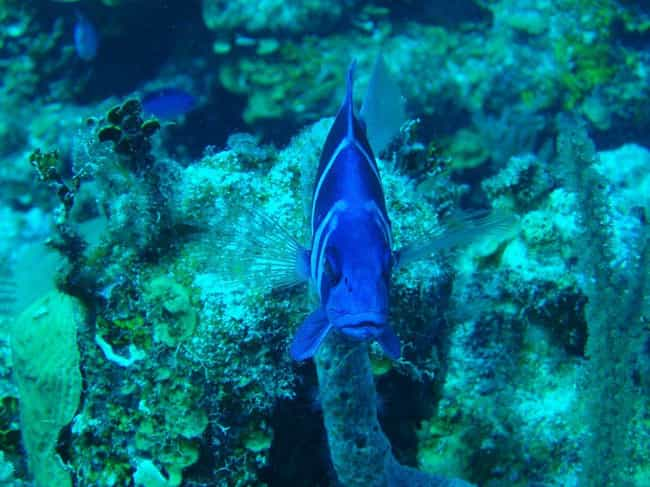 Belize is listed (or ranked) 4 on the list The Best Scuba Destinations In The World