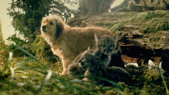 Benji the Hunted is listed (or ranked) 4 on the list The Most Absurd Things Animals Do In Live-Action Disney+ Movies