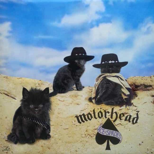 Ace of Spades is listed (or ranked) 1 on the list Genius Recreates Album Covers Featuring Cats
