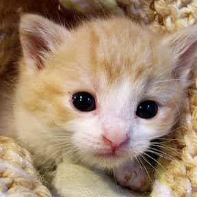 Adult Cat is listed (or ranked) 7 on the list The Best Pets for Kids