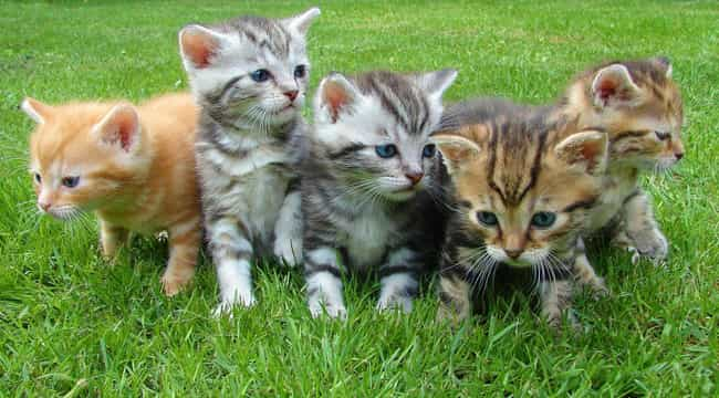 Cat is listed (or ranked) 4 on the list Animals with the Cutest Babies