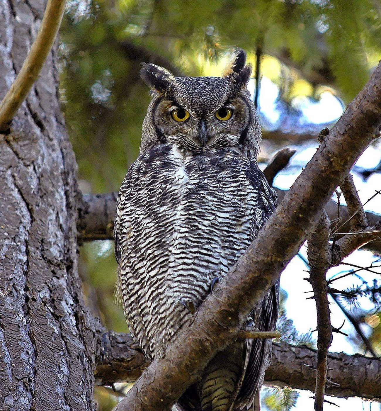 Owls Are Not Your Friend is listed (or ranked) 4 on the list Animals That Devour Their Prey In Just One Bite