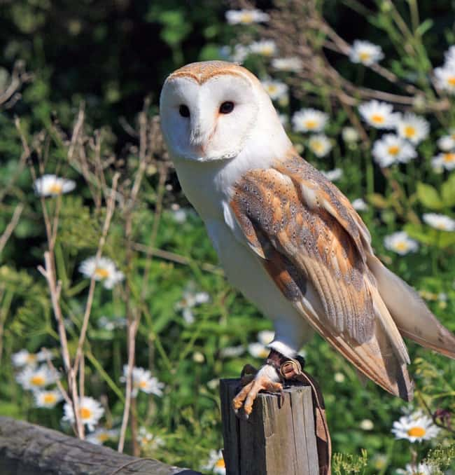 Owl is listed (or ranked) 11 on the list 28 Cute Animals That You Don't Want To Mess With