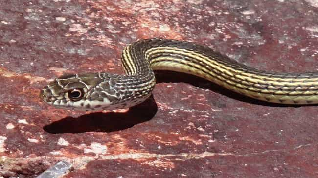 Snakes is listed (or ranked) 4 on the list 13 Times People Actually Found Animals In Sewers