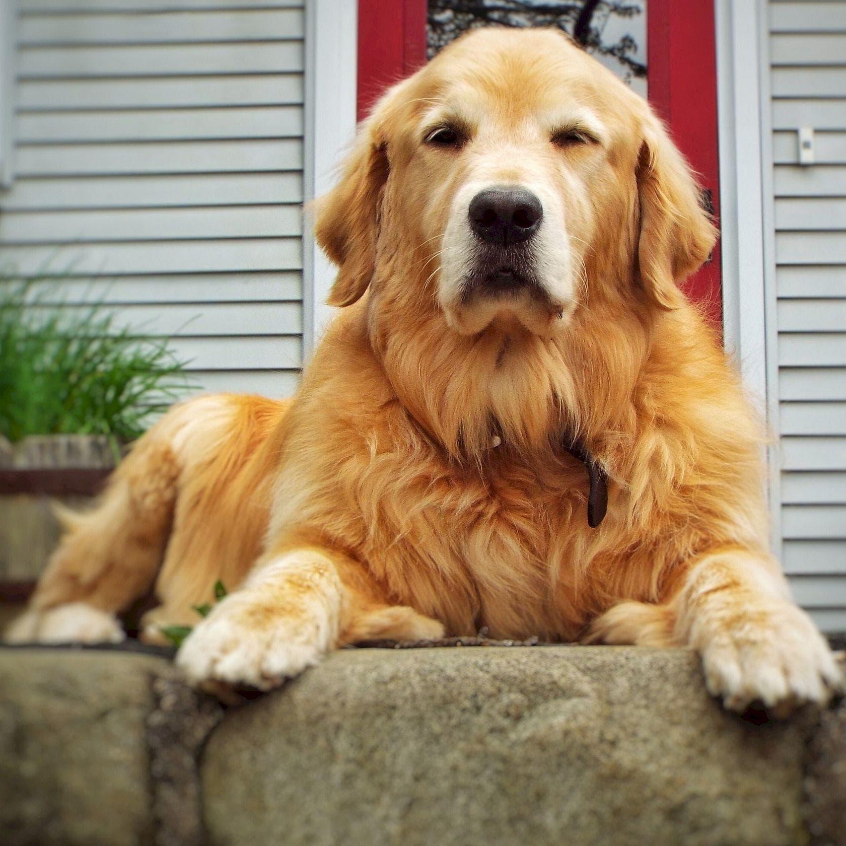 Random Very Best Dog Breeds
