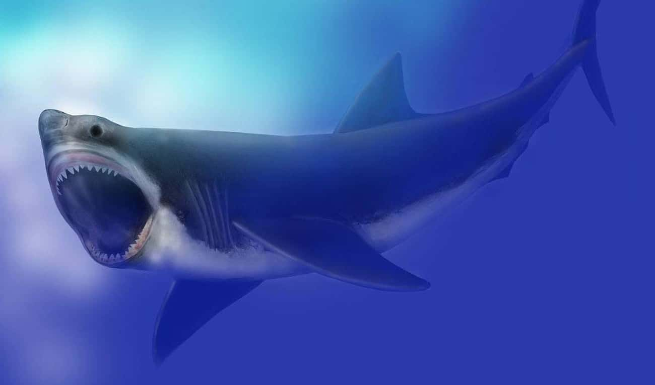Megalodon, The Whale-Sized Sha is listed (or ranked) 2 on the list The Most Horrifying Sea Monsters To Ever Terrorize The Ocean