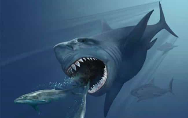 Megalodon is listed (or ranked) 1 on the list List Of Extinct Sharks, From Small to Scary