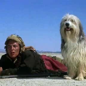 A Boy And His Dog is listed (or ranked) 18 on the list Great Movies About Kids Trying to Survive