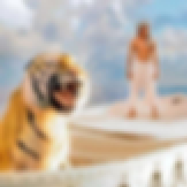 Life of Pi is listed (or ranked) 5 on the list Favorite Movies of 2012