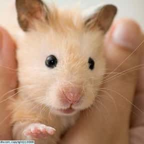 Hamster is listed (or ranked) 6 on the list The Best Pets for Kids