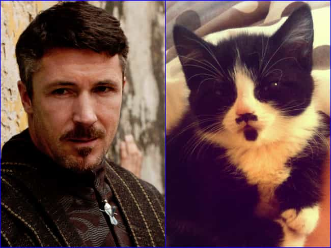 Petyr Baelish is listed (or ranked) 2 on the list 20 Cats Who Look Like GoT Characters