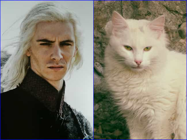 Viserys Targaryen is listed (or ranked) 4 on the list 20 Cats Who Look Like GoT Characters