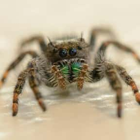 Spider is listed (or ranked) 23 on the list The Scariest Animals in the World