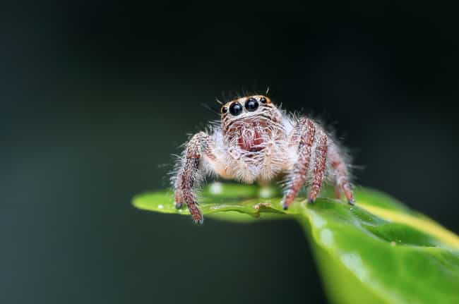Spider is listed (or ranked) 3 on the list 14 Fascinating, Borderline Unbelievable Animal Brains