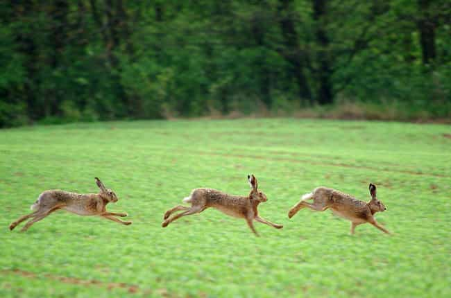 Hare is listed (or ranked) 4 on the list The Fastest Animals in the World