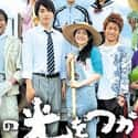 Asu no Hikari wo Tsukame is listed (or ranked) 36 on the list The Best Japanese Television Drama TV Shows