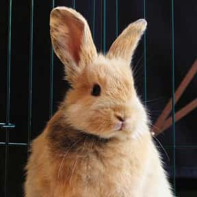 Rabbit is listed (or ranked) 5 on the list The Best Pets for Kids