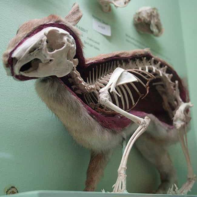 Rabbit is listed (or ranked) 3 on the list Here's What the Skeletons of All Your Favorite Cute Animals Look Like