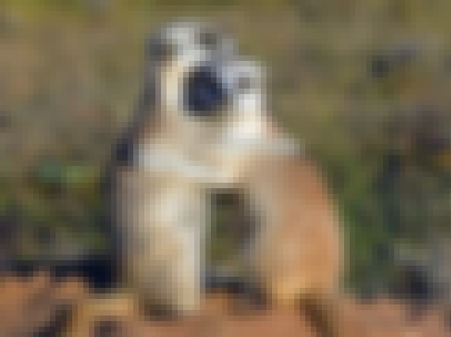 Meerkat is listed (or ranked) 3 on the list 25+ Desert Creatures That Have Adapted To Extreme Conditions