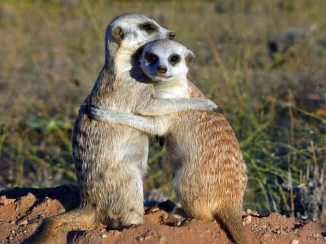 desert animals creatures that live in deserts