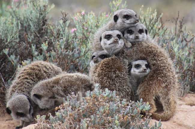 Meerkat is listed (or ranked) 3 on the list Which Wild Animal Are You Most Like, According To Your Zodiac Sign?