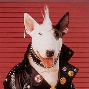 Spuds MacKenzie the Bud Light  is listed (or ranked) 2 on the list The Greatest Animals in Commercials