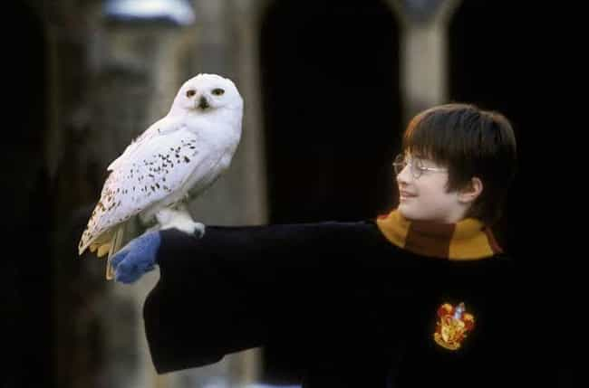 Hedwig is listed (or ranked) 1 on the list Every Single Harry Potter Pet, Ranked