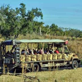 Kilimanjaro Safaris is listed (or ranked) 14 on the list The Worst Amusement Park Rides To Get Stuck On