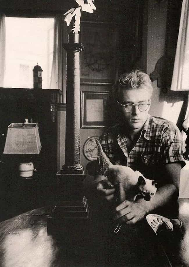 James Dean is listed (or ranked) 3 on the list Cool Old Photos of Celebrities with Their Cats
