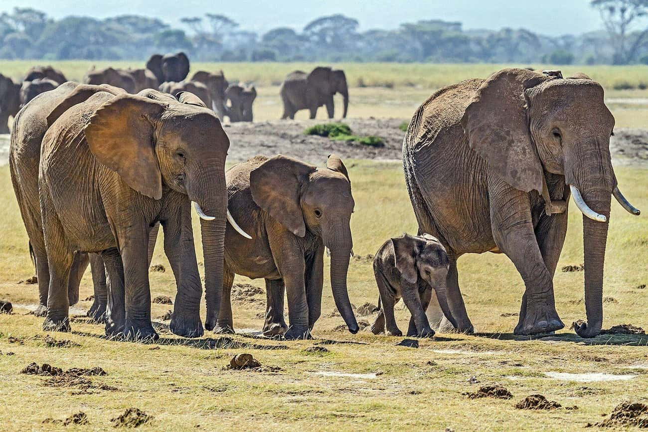 Elephant Grandmas Help Raise T is listed (or ranked) 2 on the list Single Moms Of The Animal Kingdom Doin' It For Themselves